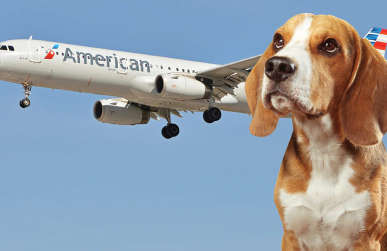 Как перевозить собак и кошек в самолете