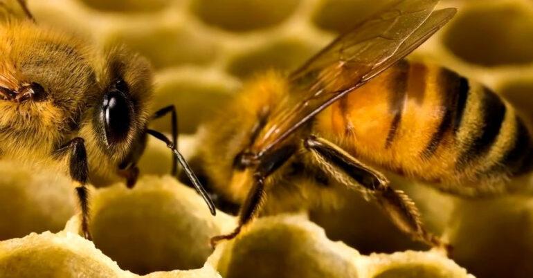 Особенности организации экспорта мёда из Украины
